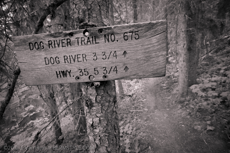 dog-river-72