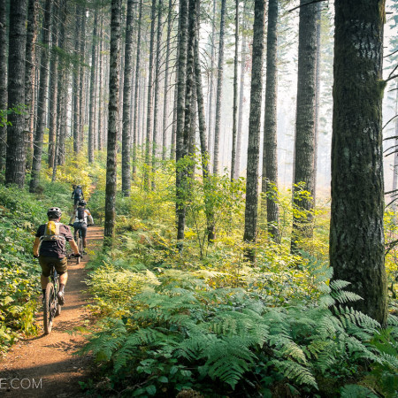 image for Portland Area Trails: The Browns Camp Loop