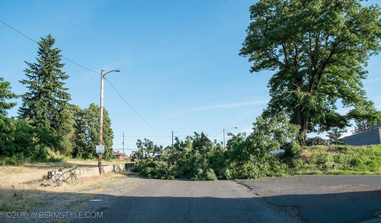 fallen-tree-pdx-3613