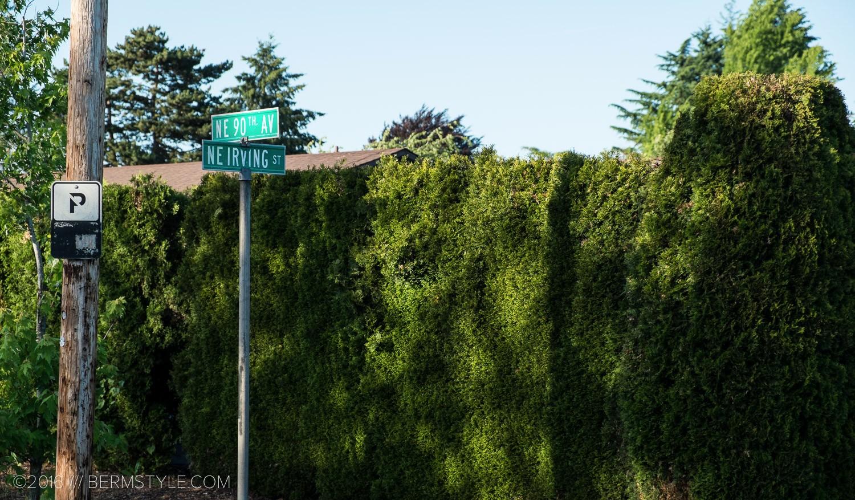 fallen-tree-pdx-3635