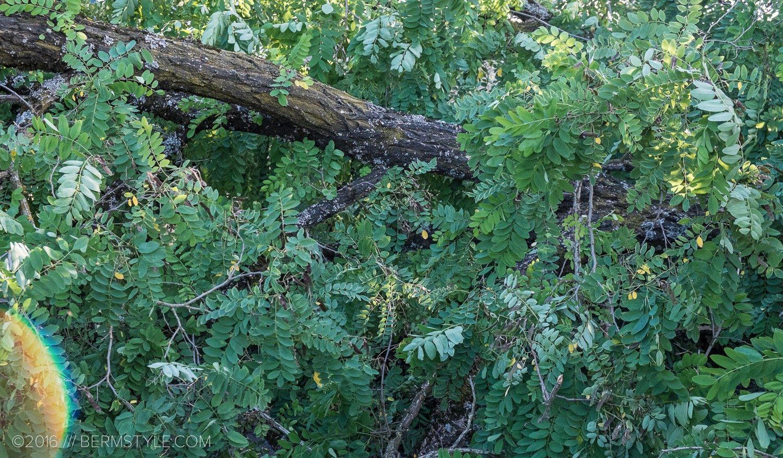 fallen-tree-pdx-3666