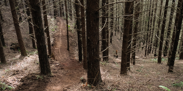 Scappoose, Oregon: the Rocky Point Trail System - A Work in Progress feauted image
